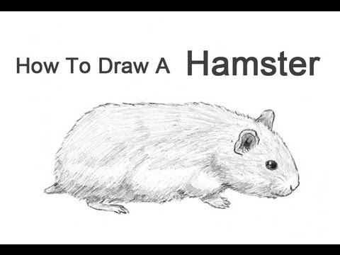 Drawn hamster How a  to YouTube
