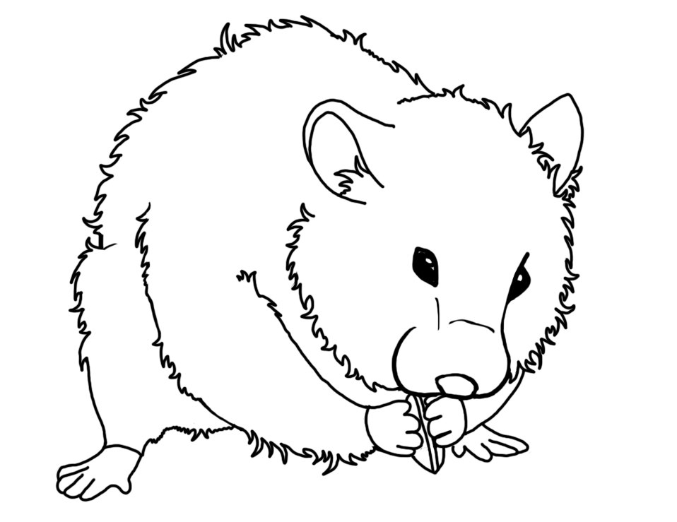 Drawn hamster coloring page Pages Pages Coloring and free