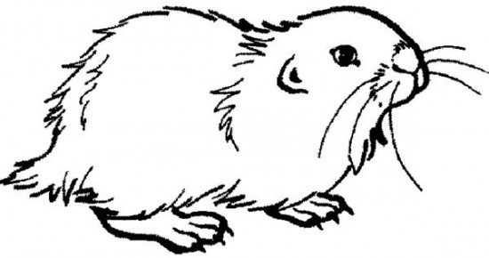 Drawn hamster coloring page Free About Kids Coloring Hamster