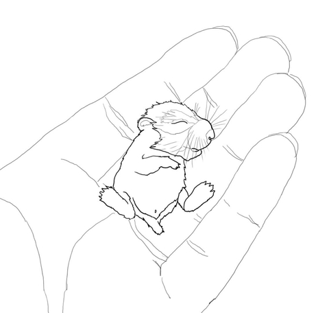 Drawn hamster coloring page Page in Hamster Free of