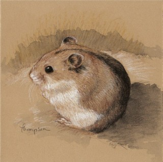 Drawn hamster dwarf hamster 17 Pinterest on Brown Self