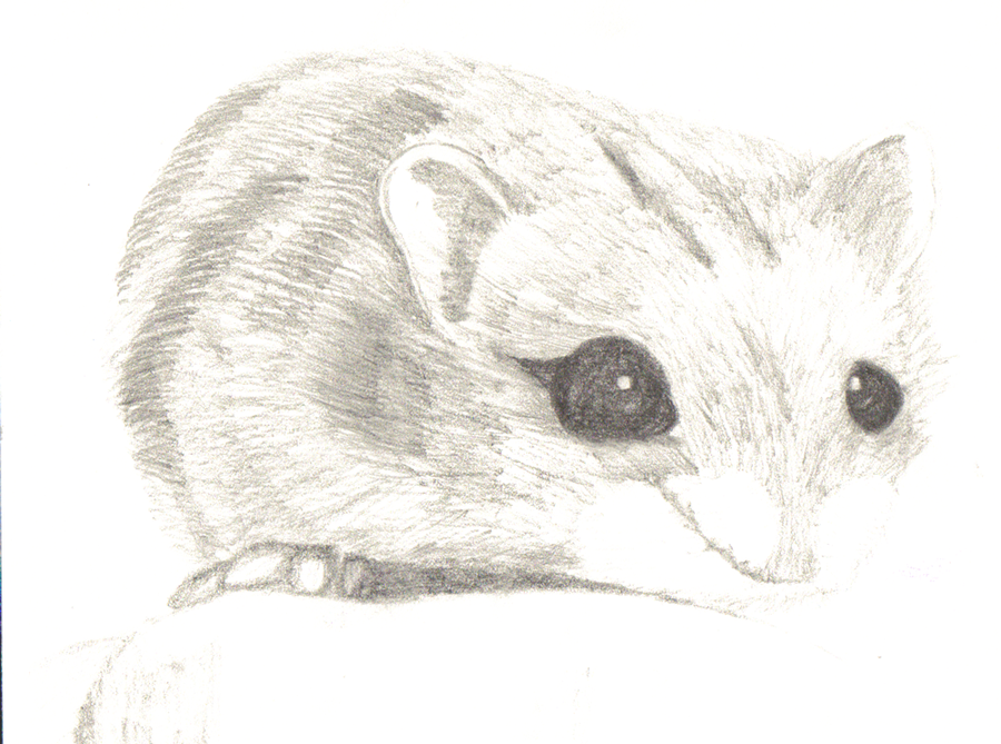 Drawn hamster dwarf hamster  Draw How A by