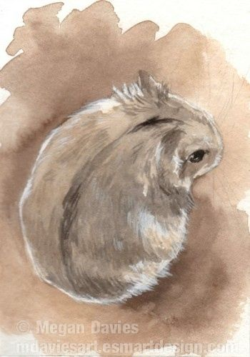 Drawn hamster dwarf hamster Russian on by ideas ACEO