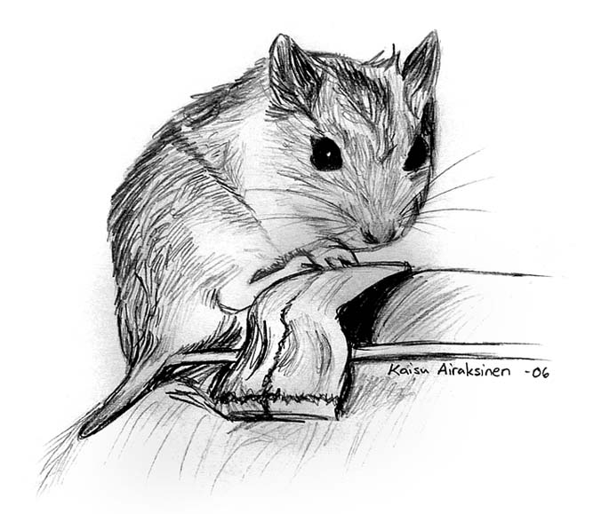 Drawn hamster dwarf hamster Chinese Chinese by DeviantArt Hippis