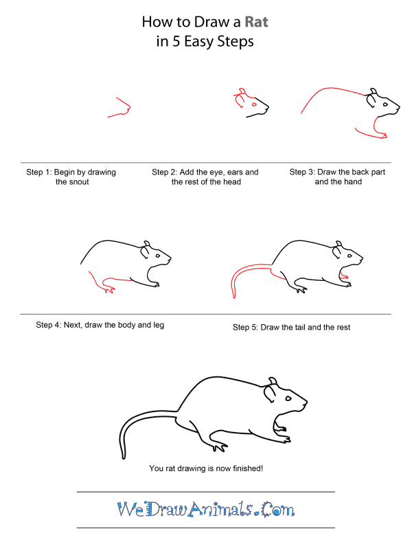 Drawn rat easy Quick A How To How