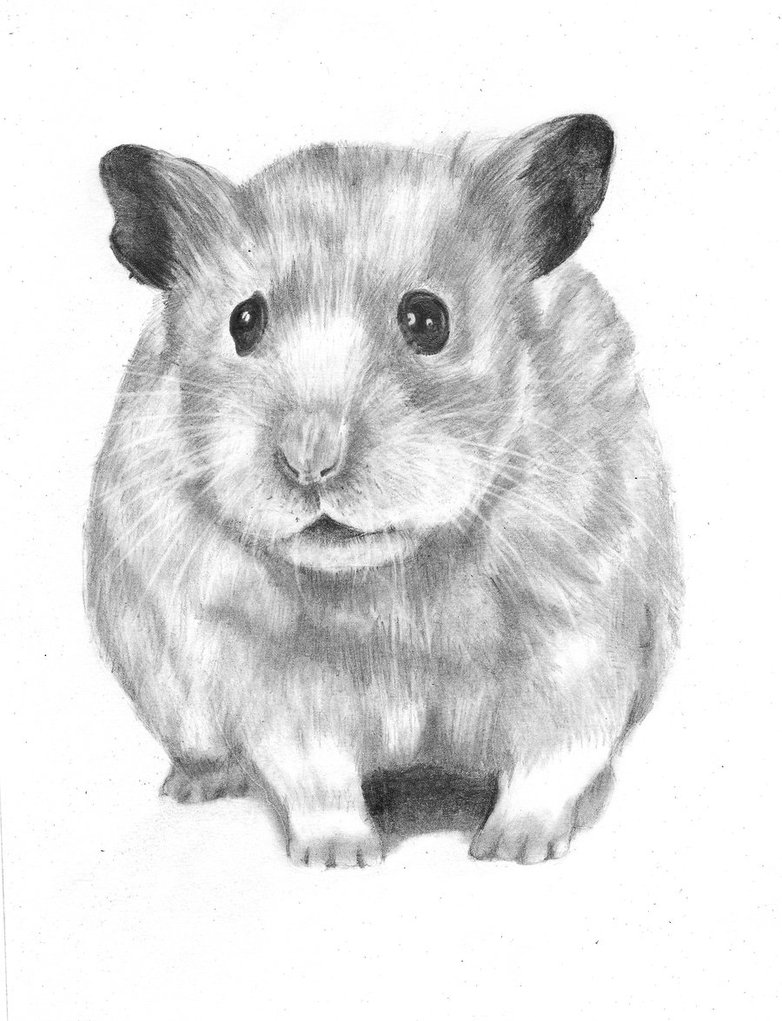 Drawn rodent cute Drawing drawing Search  hamster