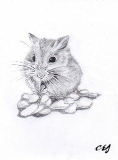Drawn hamster robo Best Google drawing hamster Google