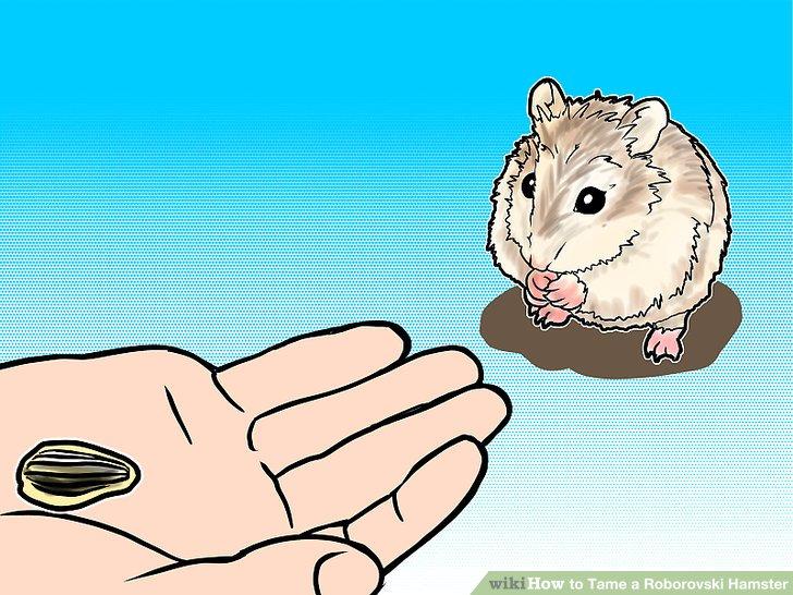 Drawn hamster robo Tame Step titled (with Roborovski