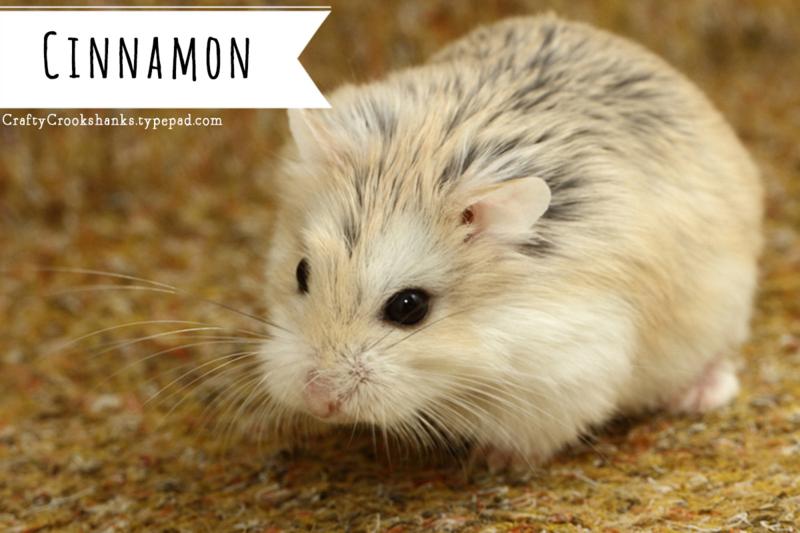 Drawn hamster robo Tip Roborovski Crookshanks: Sweet Dwarf