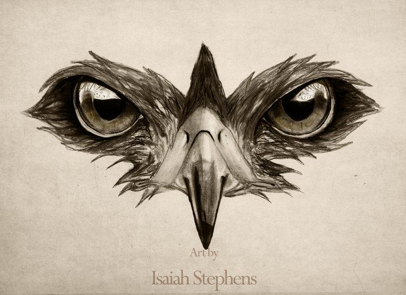 Drawn hawk IsaiahStephens 20+ Hawk by deviantART