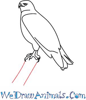 Drawn hawk To How A Draw Tutorial