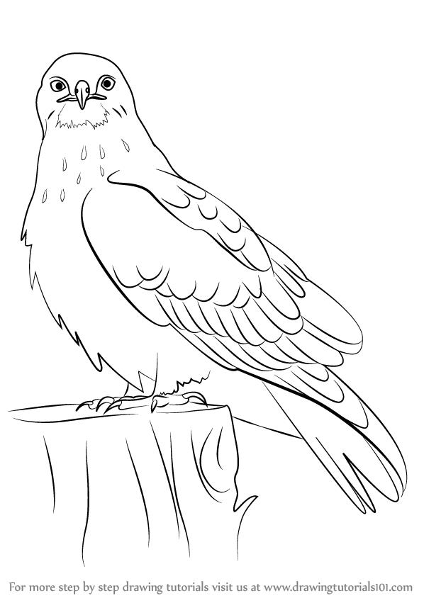 Drawn hawk Drawing Pencil Drawing Image Realistic