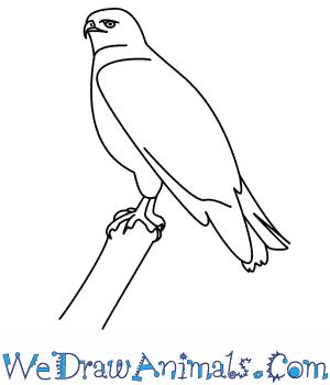 Drawn hawk Draw To Hawk A How