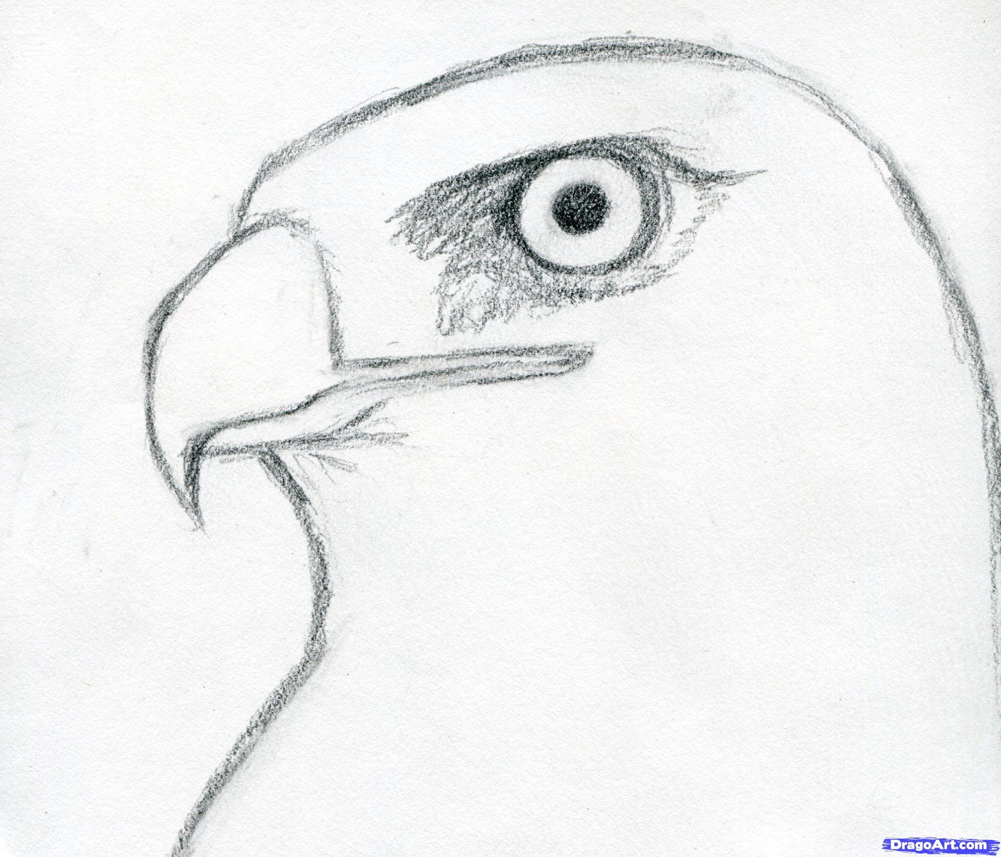 Drawn hawk Draw lightofunity Step Coloring Sheets