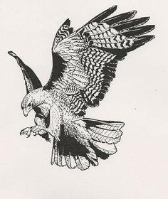 Drawn hawk Drawing Tattoo … hawk Search