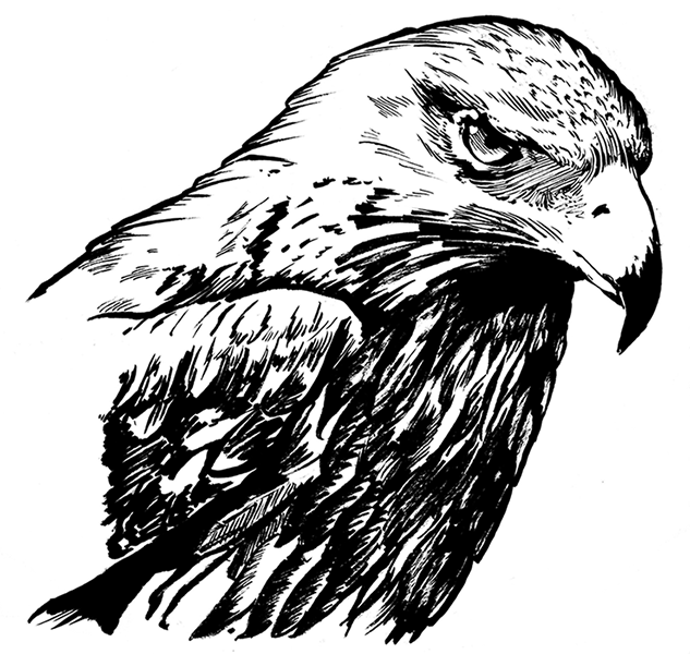 Drawn hawk Hand SHIMIZU Union — Drawn