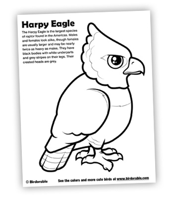 Drawn hawk baby #11