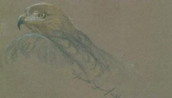 Drawn hawk dark Paper – Dark Drawing Western
