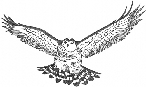 Drawn hawk flying Hawk Flying Hawk em Flying