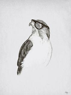 Drawn hawk hawk eye
