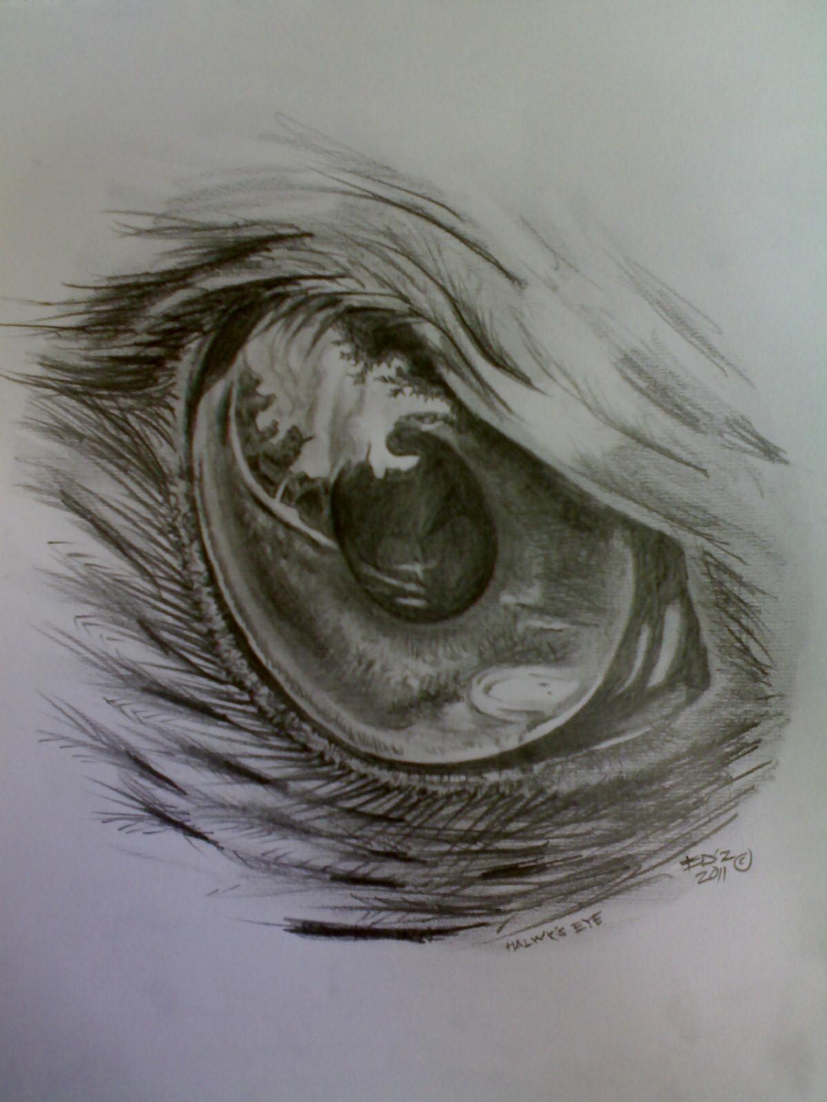 Drawn hawk hawk eye Hawk drawing Eyes Hawk Drawing