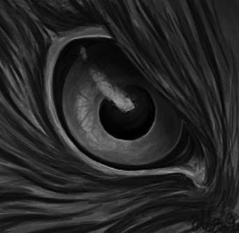 Drawn hawk hawk eye Hawk drawing drawing Pinterest Hawk