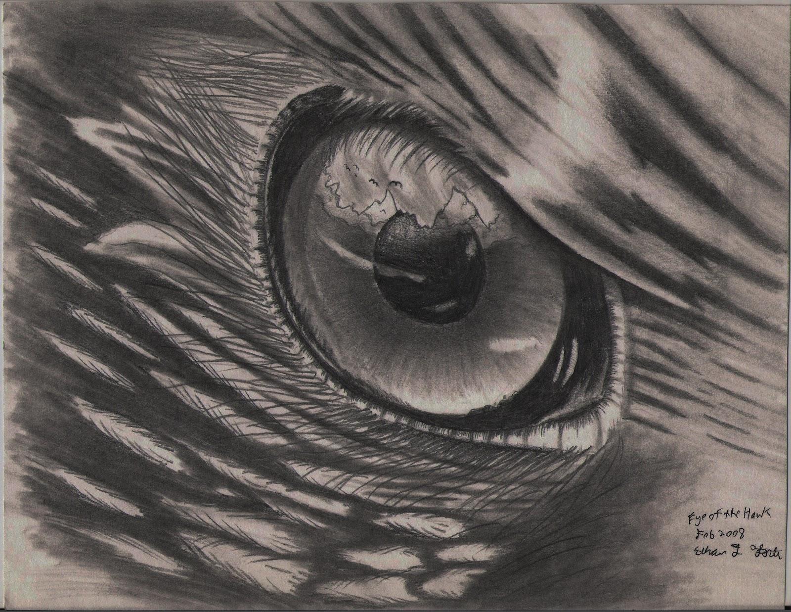 Drawn hawk hawk eye Pencil Hawk Pencil Pencil H