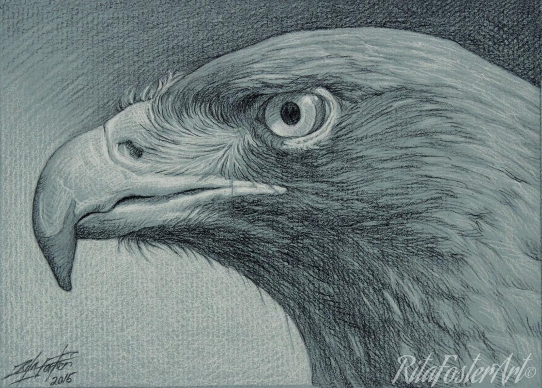 Drawn hawk hawk eye Hawk Charcoal Charcoal BY Drawing