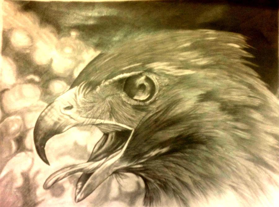 Drawn hawk hawk eye Birds Hawk by Mohammed Mohammed