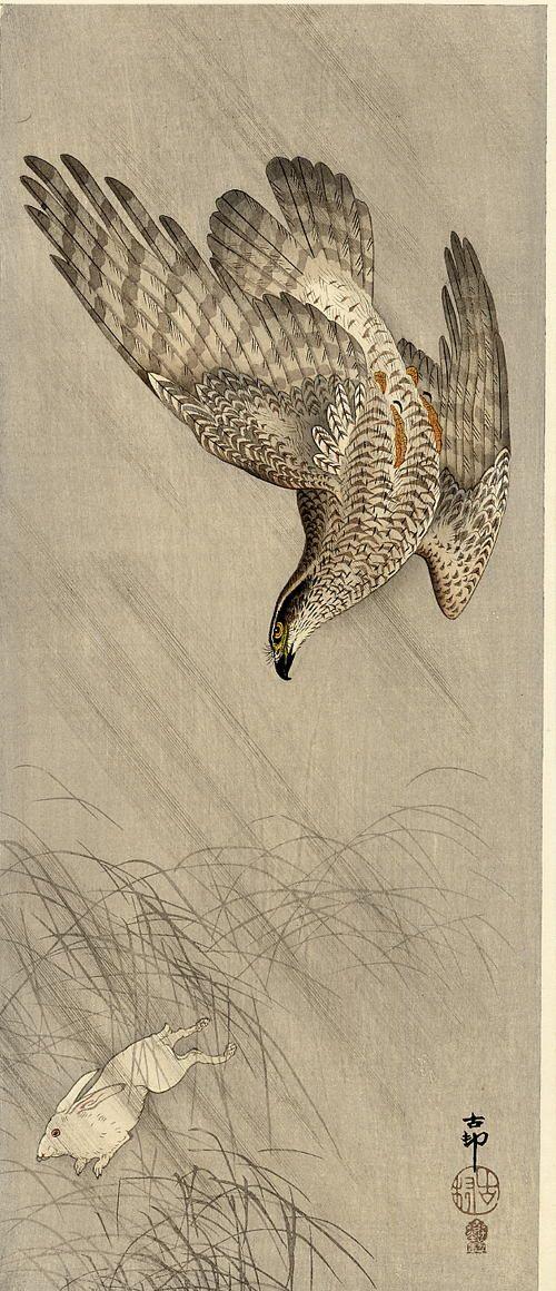Drawn hawk hunter On Pinterest Raptors japanese Animal
