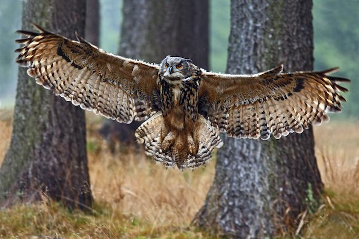 Drawn hawk mean Meaning Spirit Spirit Owl Animal