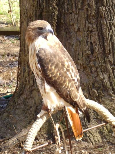 Drawn hawk mean Divine Symbolism  Hawk Sparks: