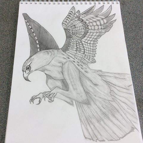 Drawn hawk shaded Photos Instagram and if is