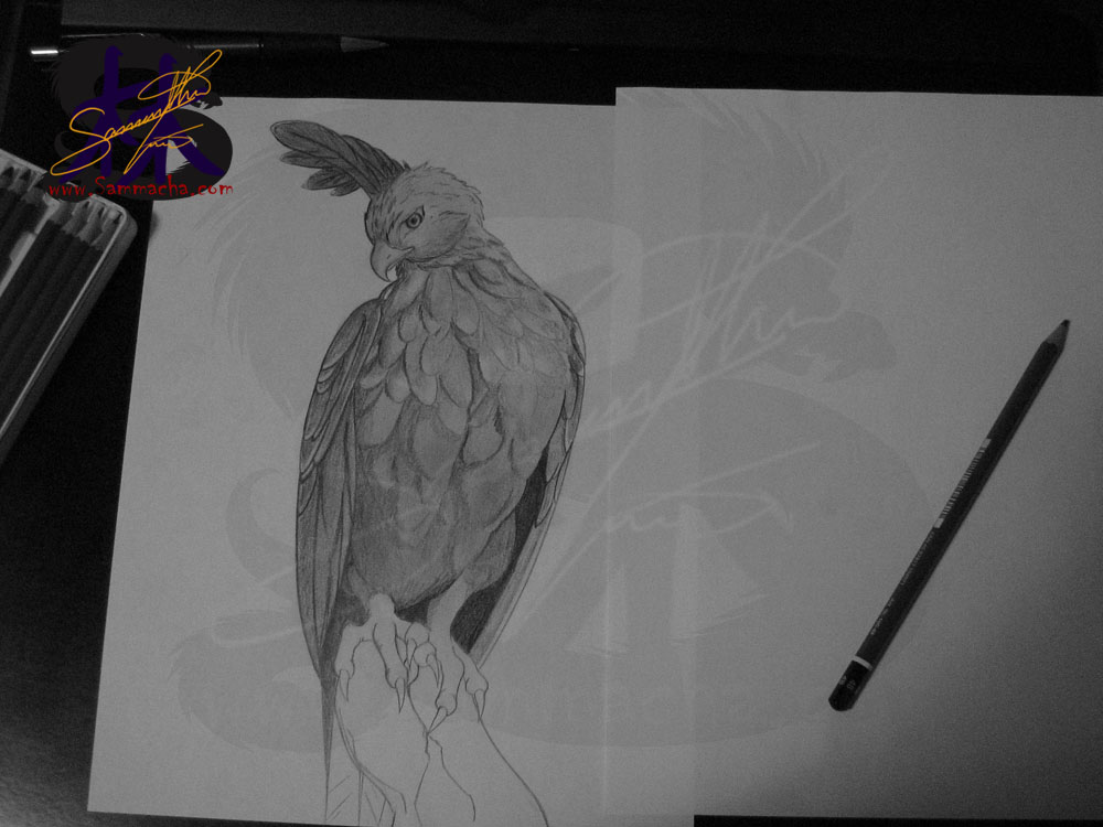 Drawn hawk shaded Lighter to com the taken