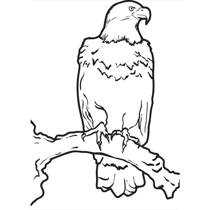 Drawn hawk standing eagle & Eagle Templates Free Eagle