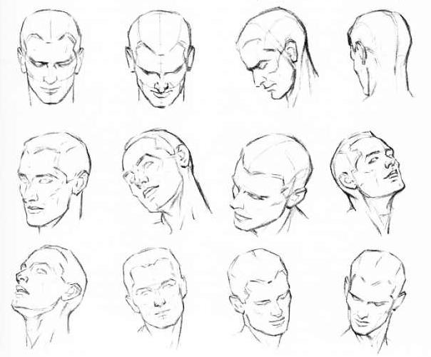 Drawn head anatomical Archives human artists Anatomy Dog