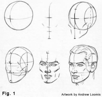 Drawn head anatomical Drawing y español en version