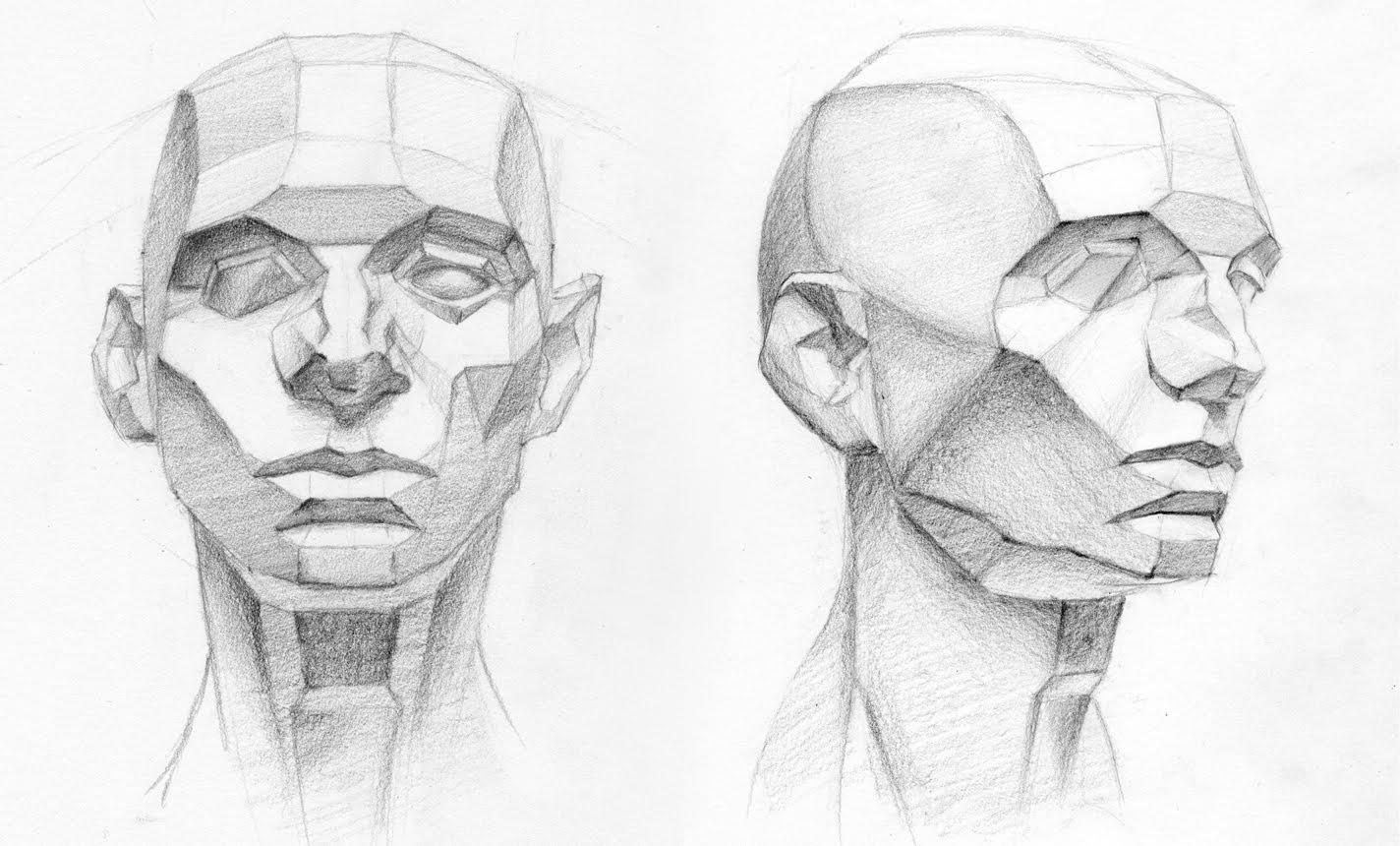 Drawn head anatomical In anatomy critiques  anatomy