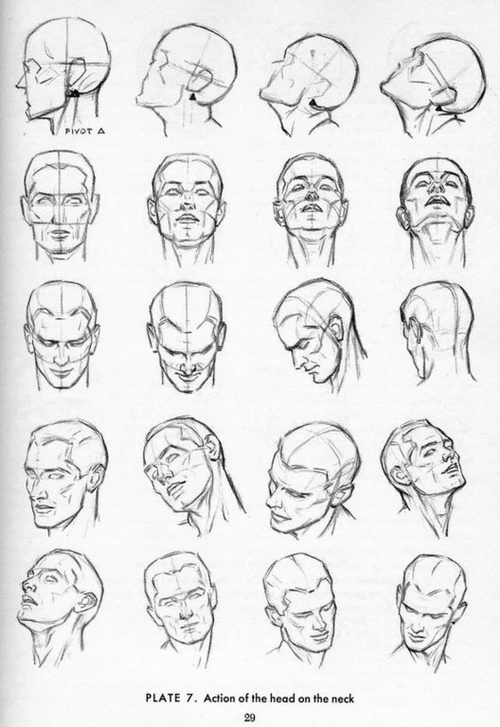 Drawn head anatomical Step a by and Tutorials