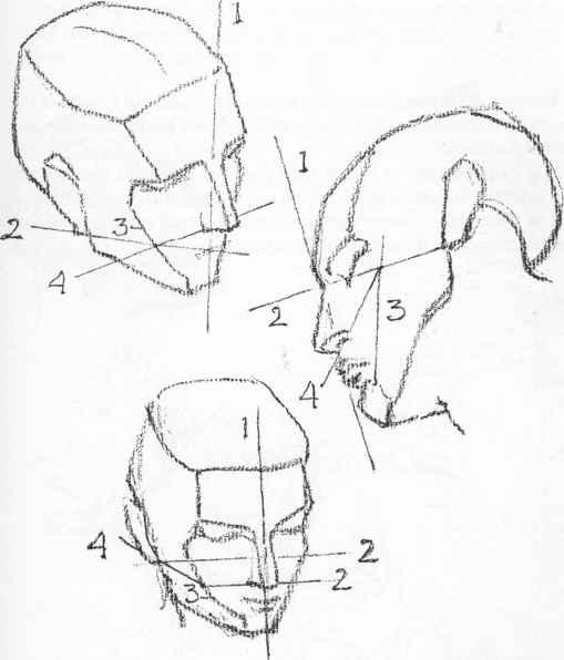 Drawn head anatomical Drawings Construction Anatomical Nava Female