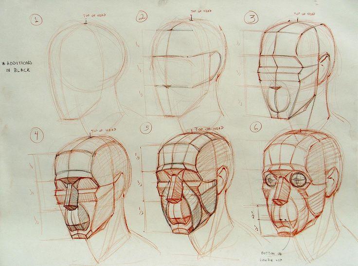 Drawn head anatomical 67 more heads on head