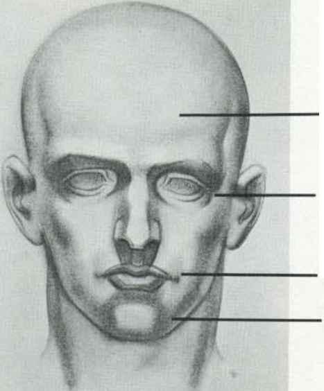 Drawn head anatomical Human Major the Anatomy Masses