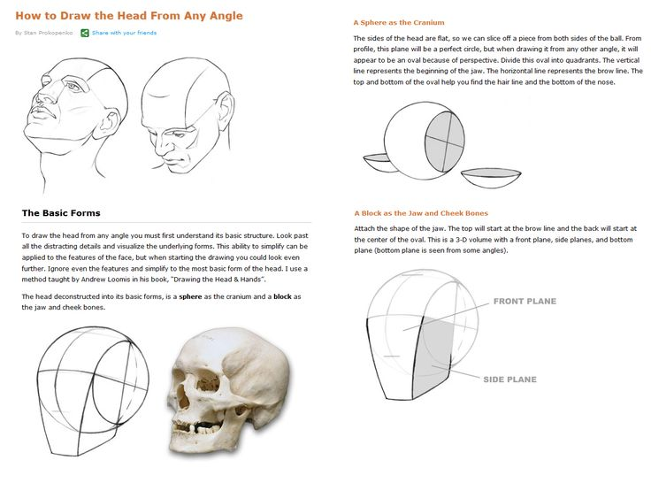 Drawn head basic Images 113 on  Drawing