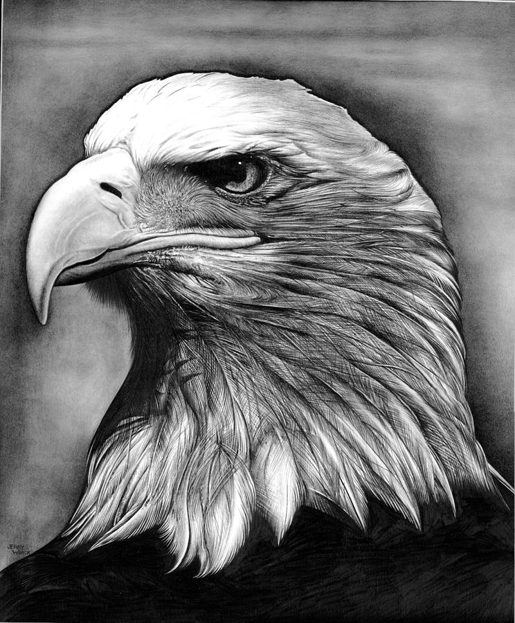 Drawn steller's sea eagle detailed Canvas by Jerry Winick Canvas