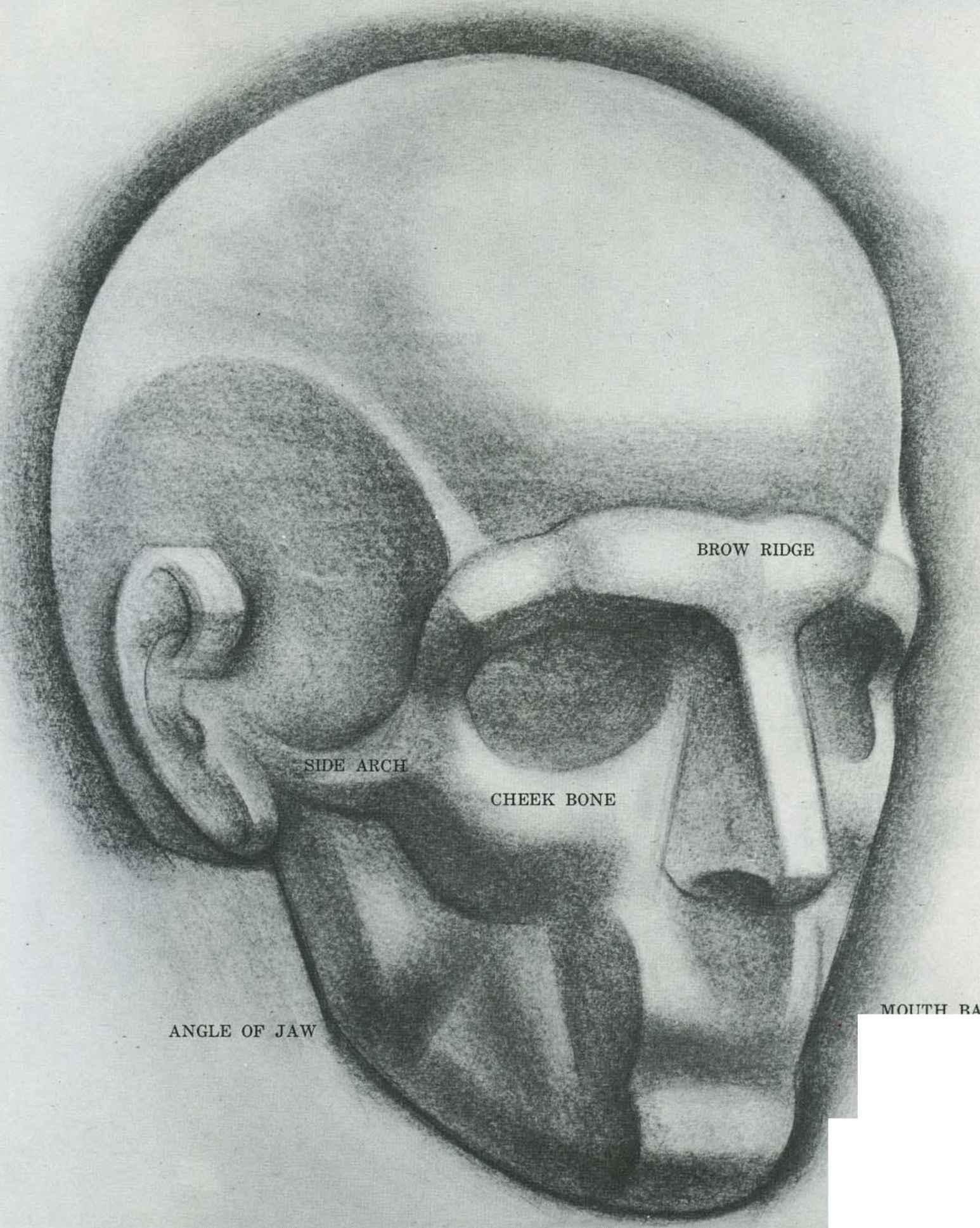 Drawn skull structure Drawing Arts Human Joshua Face