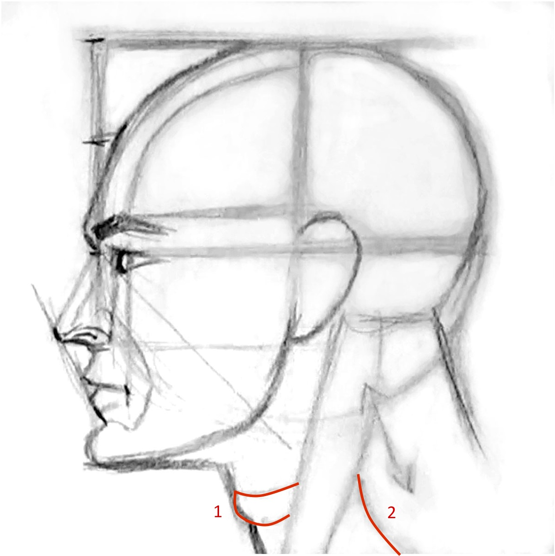 Drawn profile sideways Face  profile Find and