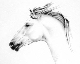 Drawn profile horse head 15 2 Draw How wikiHow