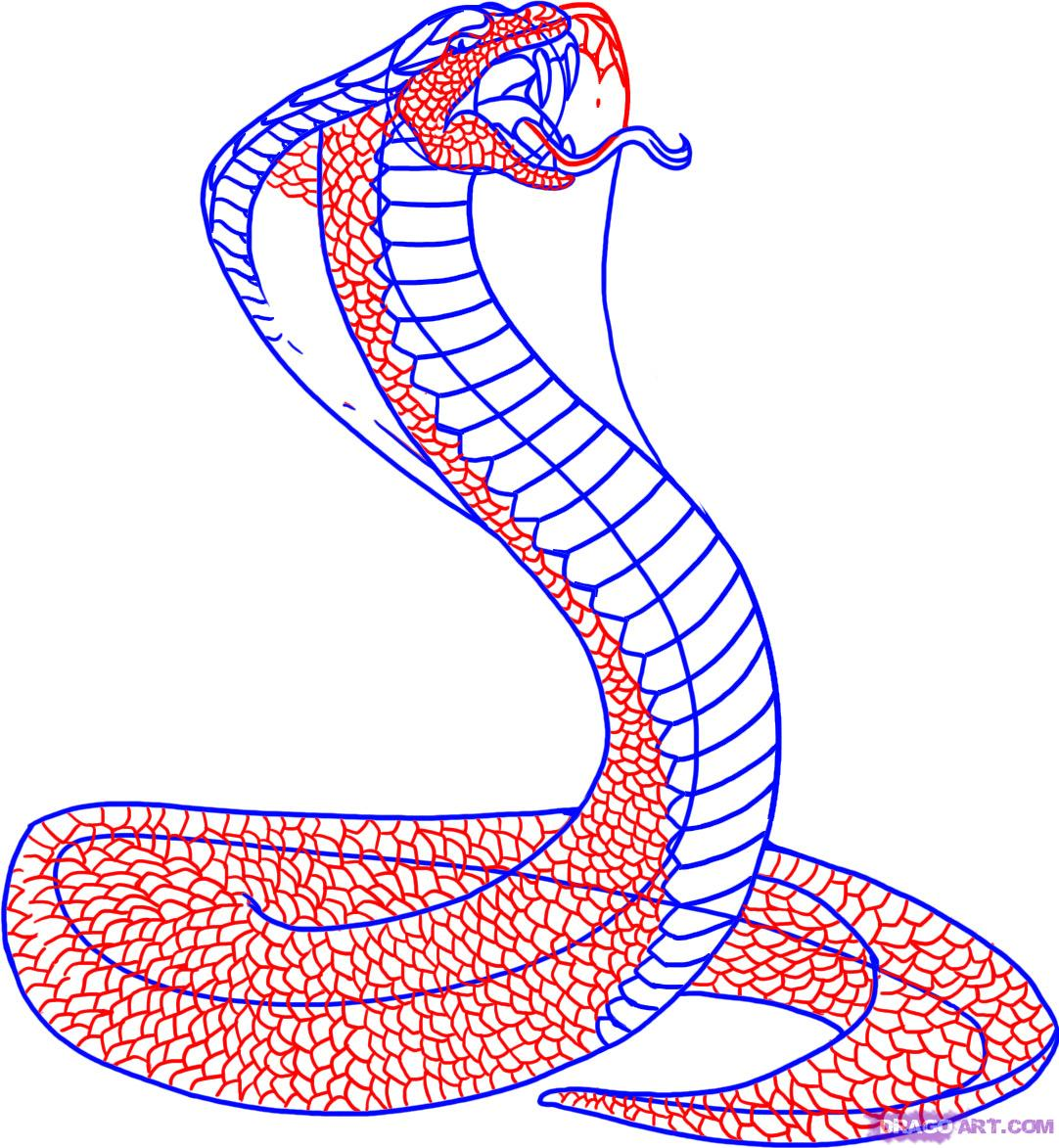 Drawn snake egyptian cobra Step Animals how A King