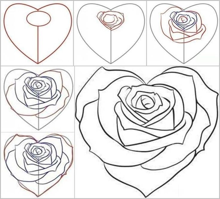 Drawn rose step by step Best from drawings Rose on