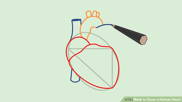 Drawn heart human heart A Draw Heart: (with Human